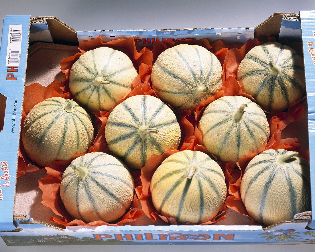 Melon (variety 'Charentais), in packaging