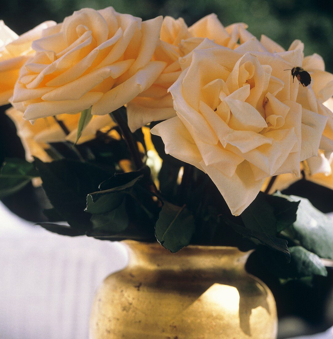 Peach Roses in Vase Outdoors; Bumble Bee