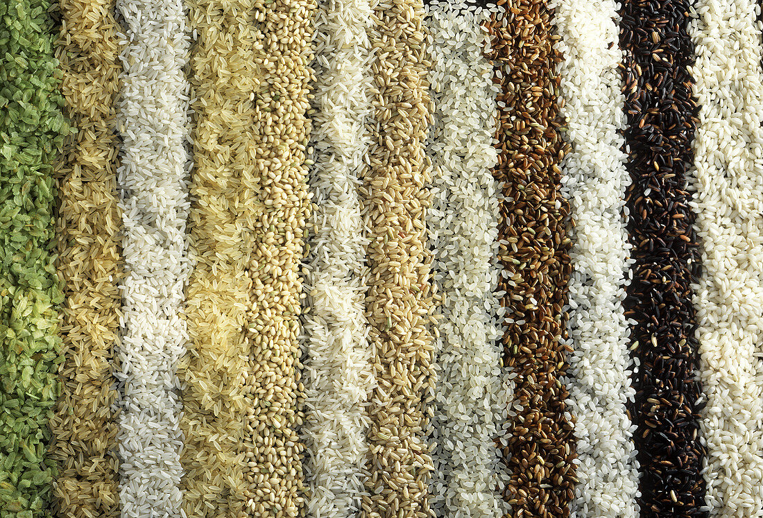 Various types of rice laid out in stripes