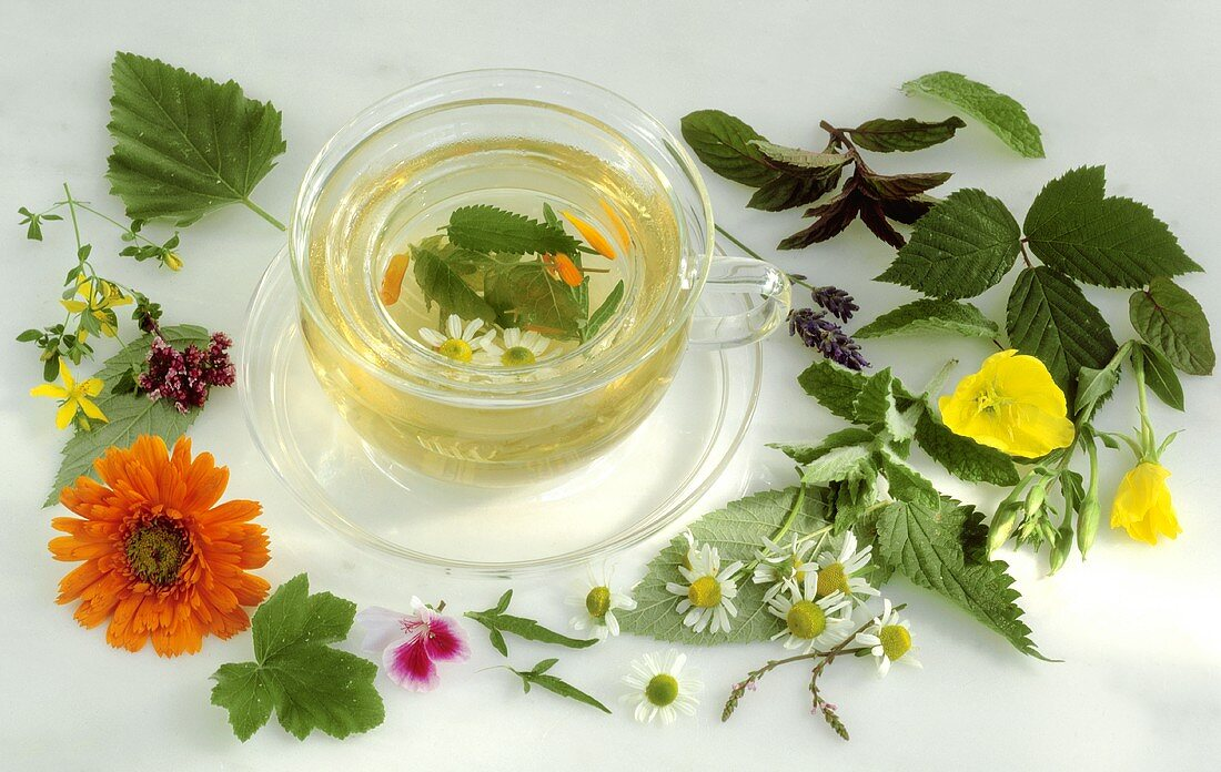 Herb tea in glass cup surrounded by fresh herbs