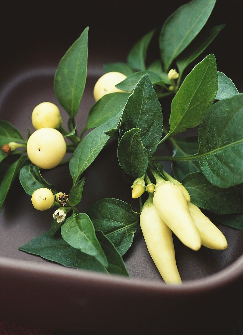 Yellow peperoncini (chili peppers, Holiday Cheer & New Holland)