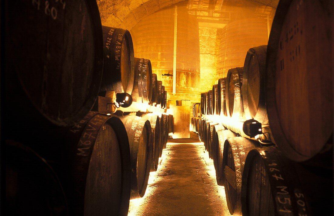 Oak barrels of Armagnac in wine cellar