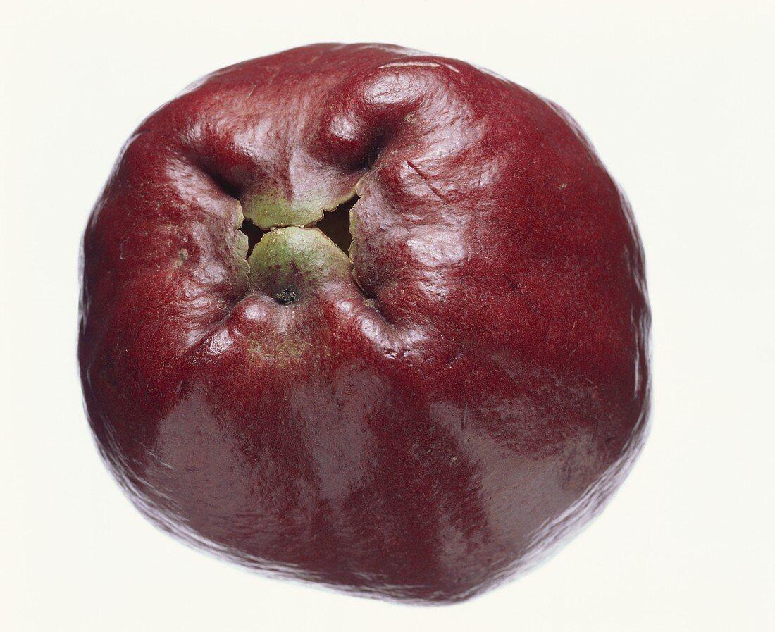 Java apple