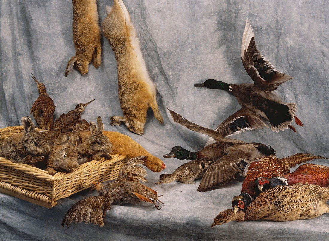 Still life with wildfowl, hare and rabbit