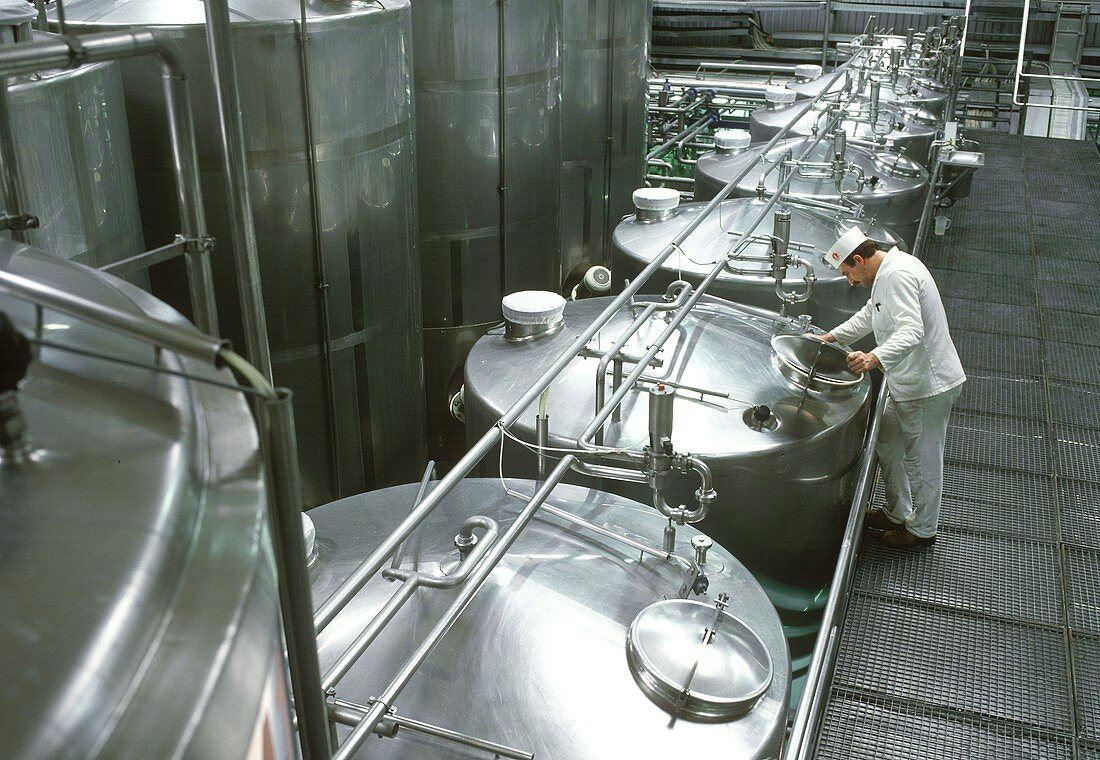 Technician at the fermenting tanks in a yoghurt factory