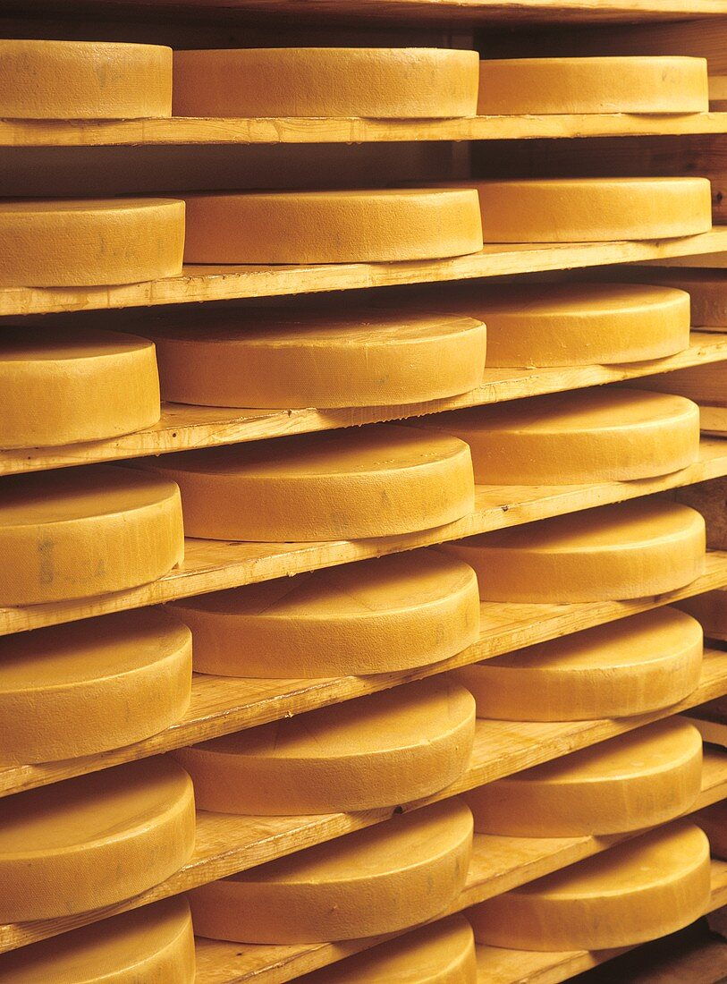 Allgau alpine cheese in maturing cellar