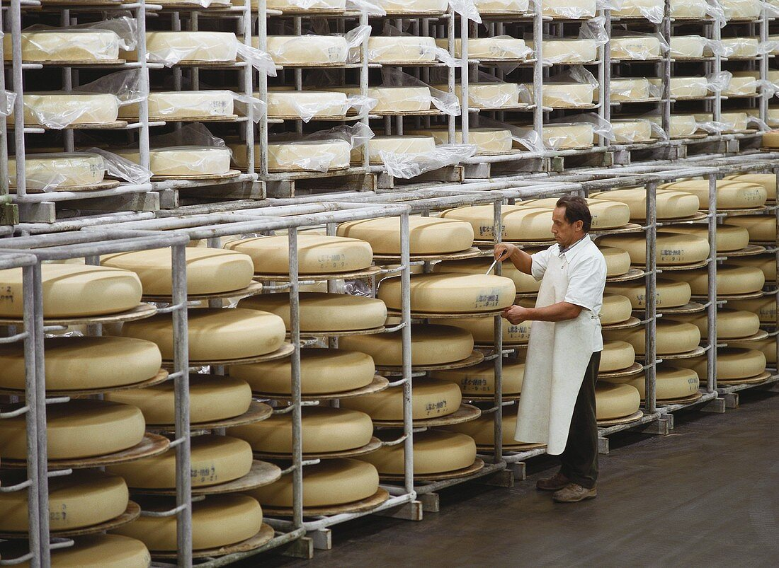 Dairyman taking sample of cheese in maturing room