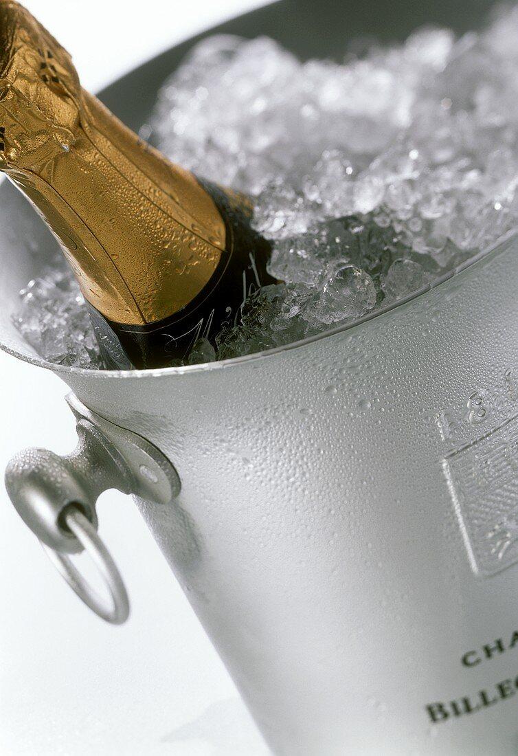 Champagne bottle in ice bucket