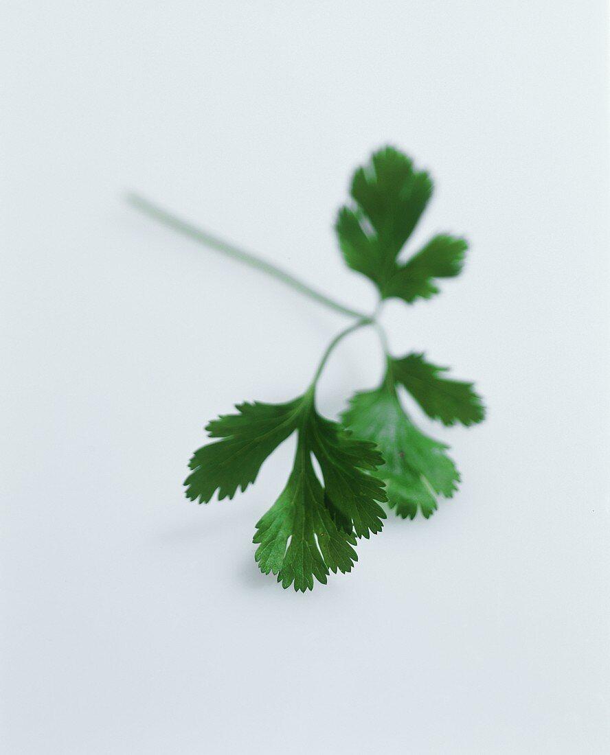 A sprig of parsley