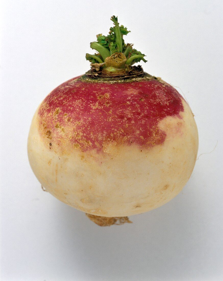 One Turnip