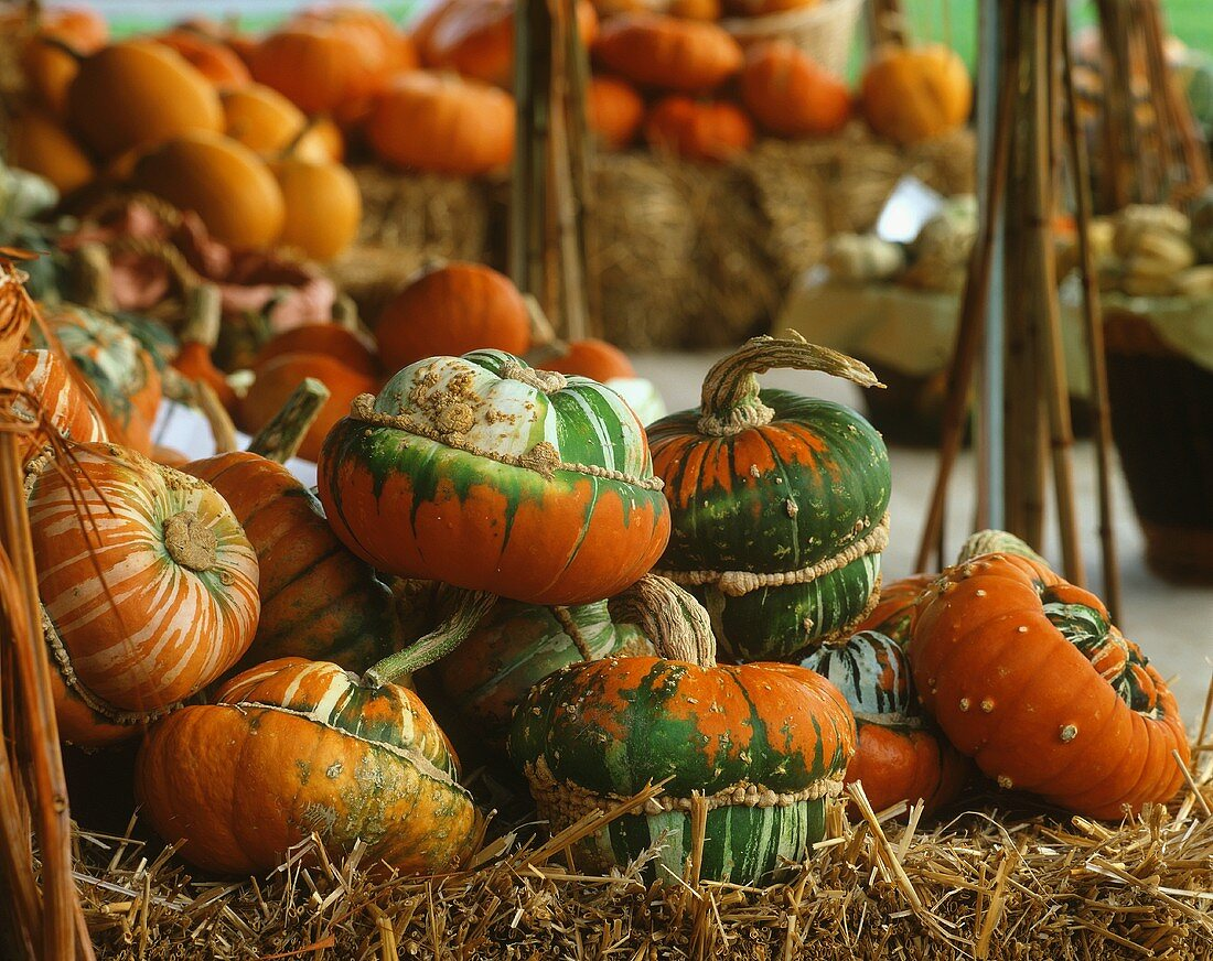 Various pumpkins on bales of straw