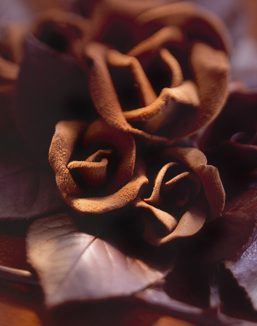 Velvety chocolate roses with chocolate leaves