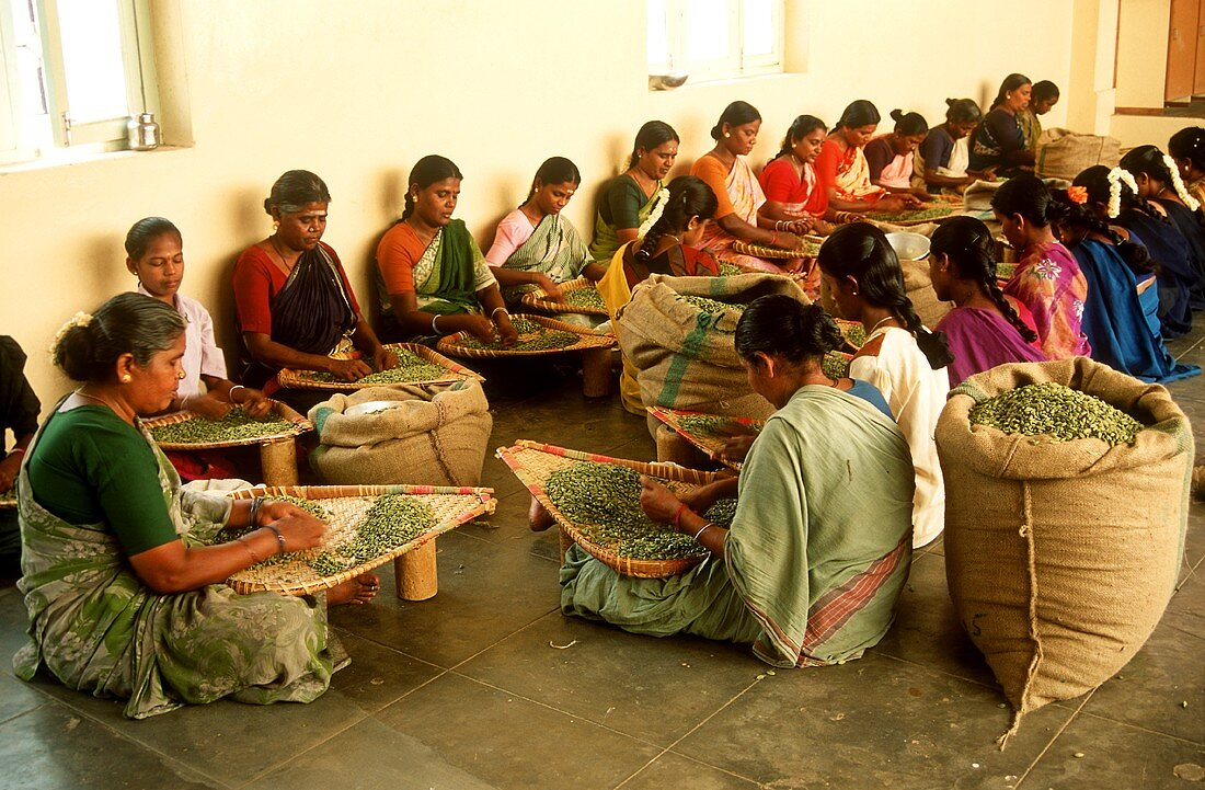 Indian women cleaning cardamom capsules