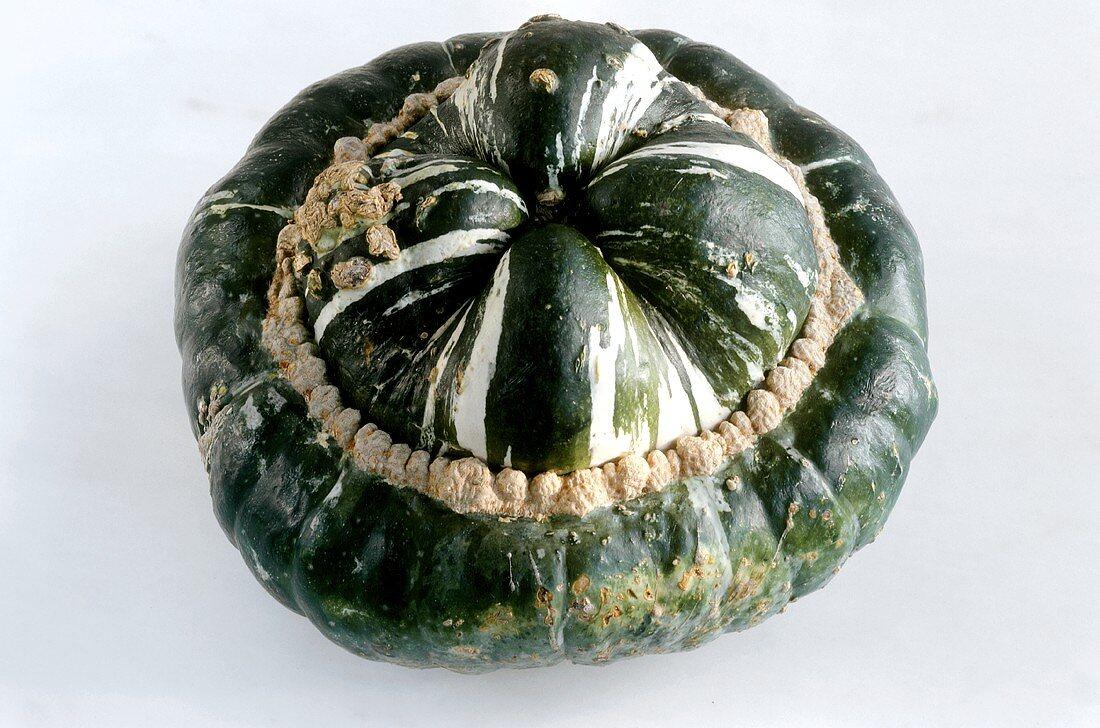 Pumpkin, Turk's Turban variety