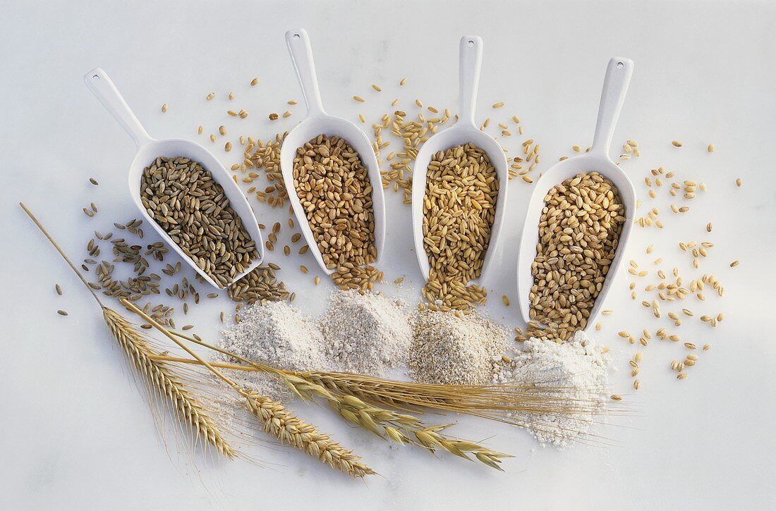 Various types of cereals and flour with cereal ears
