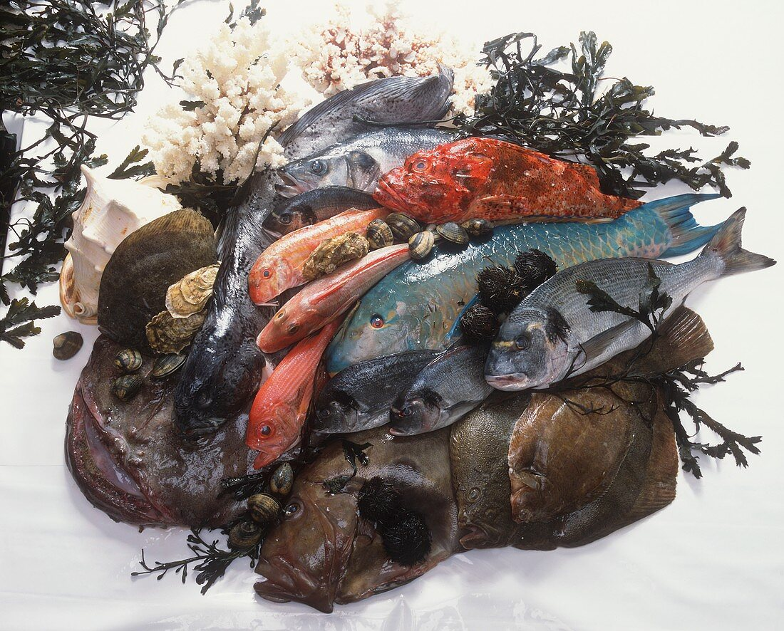 Various fresh fish with seaweed and shells