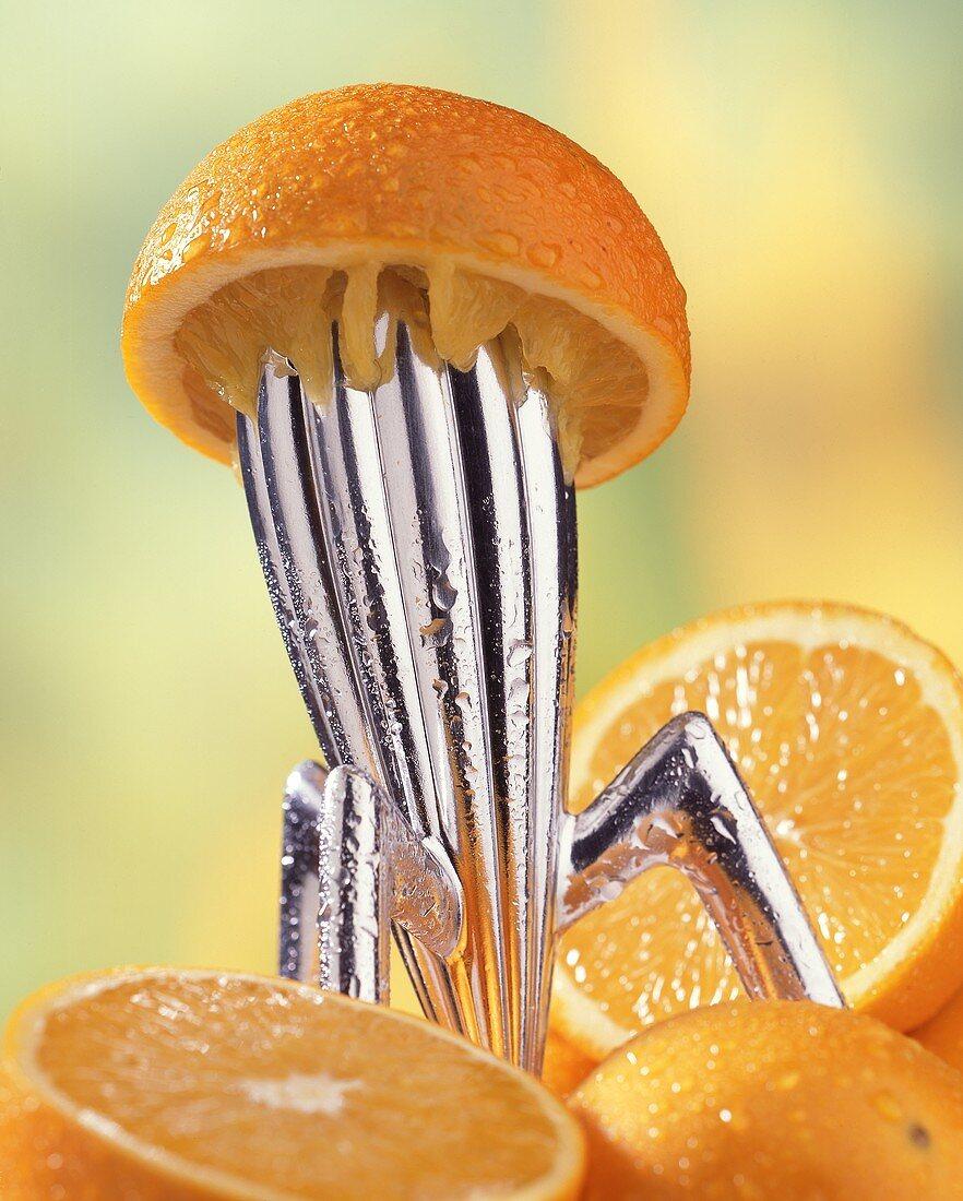 Oranges on lemon squeezer
