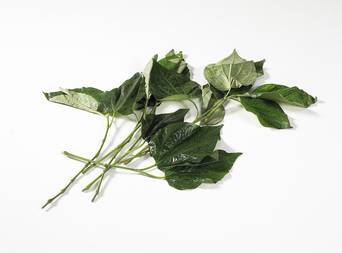 Cha-plu leaves (leaves of Piper sarmentosum, Thailand)