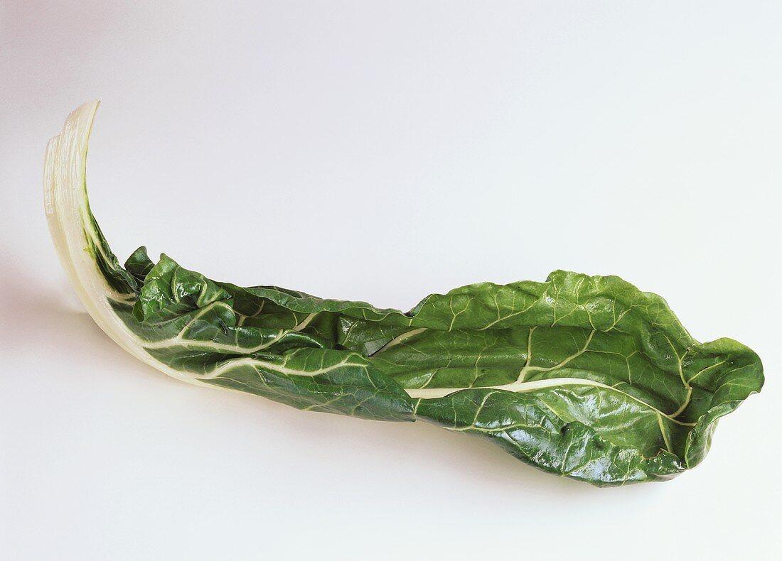 A green chard leaf