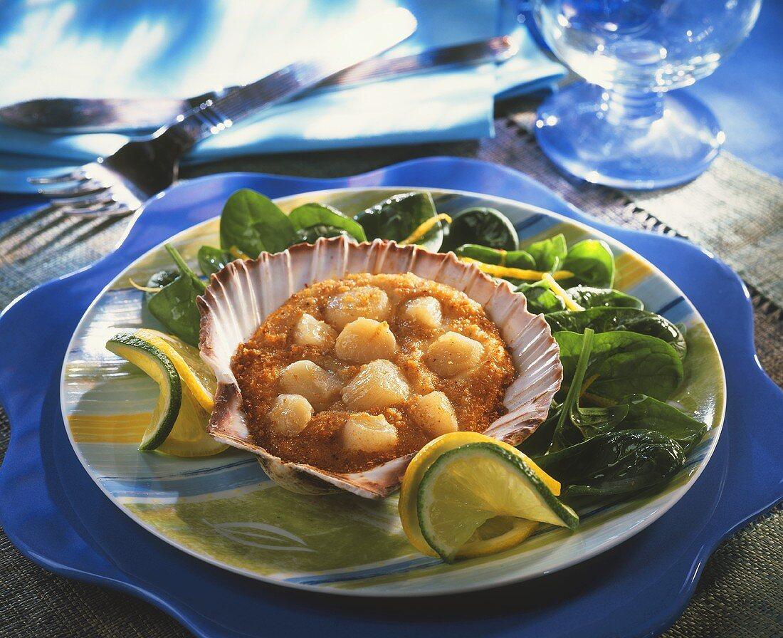 Scallop au gratin on spinach (Brittany)