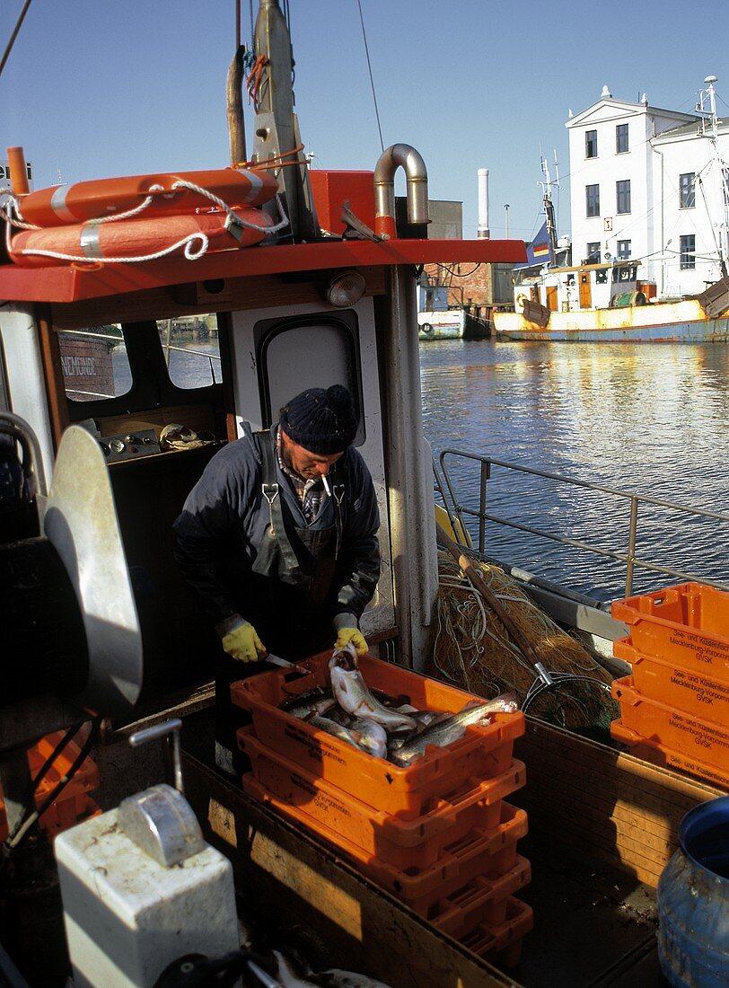Fisherman with catch on a boat near Warnemünde