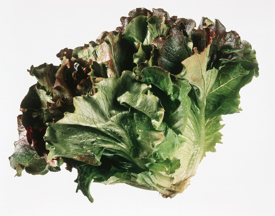 A batavia lettuce