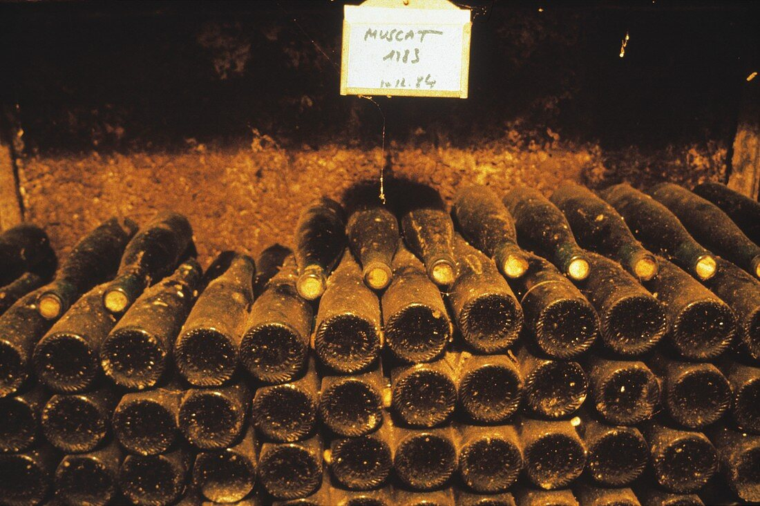 Old Muscat wine bottles laid down in cellar, Alsace