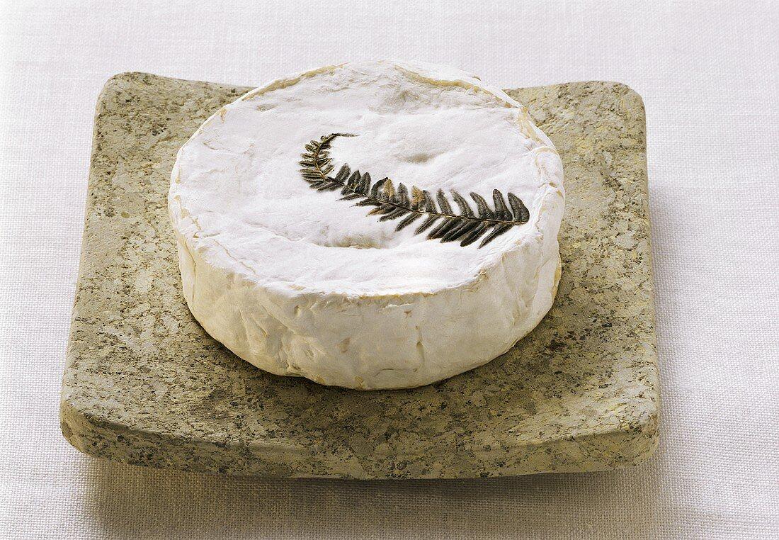 Fougeru (raw milk cheese with fern frond) on stone slab