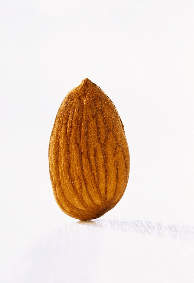 An almond, standing with shell