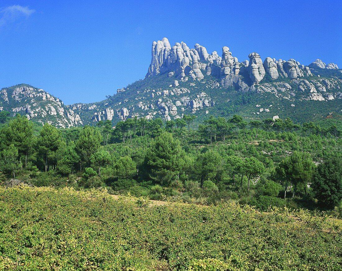 Vineyard near El Bruch with Montserrat mountains, Spain