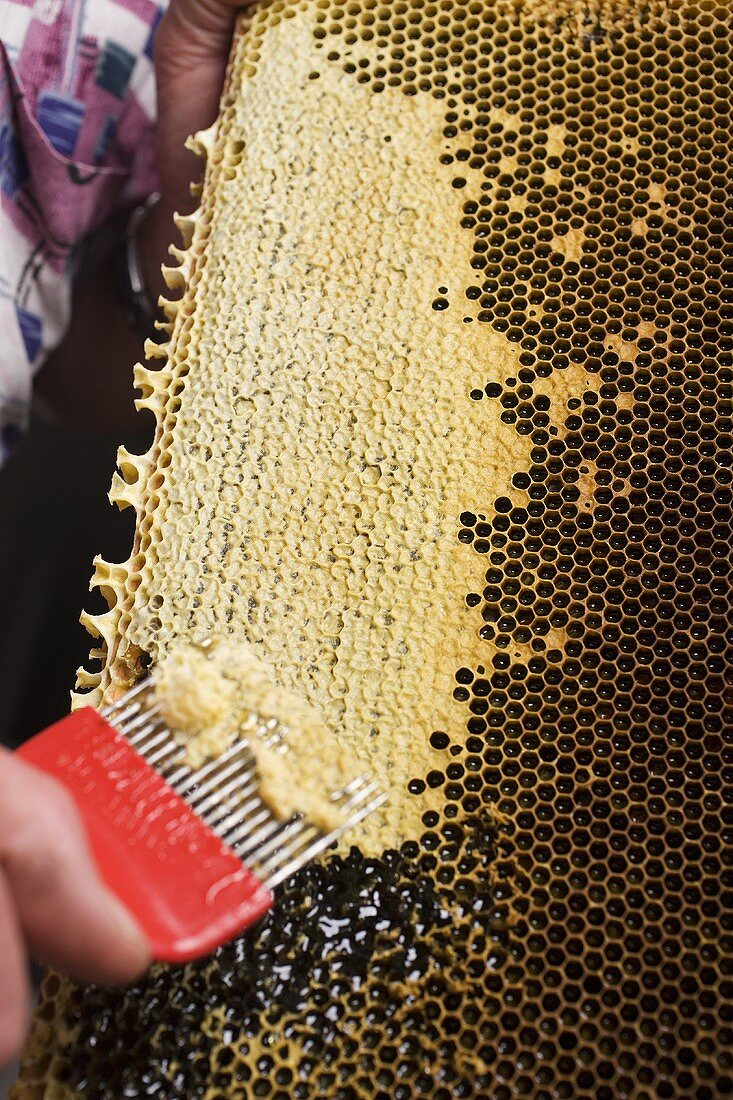Hand scraping wax from honeycomb with uncapping fork
