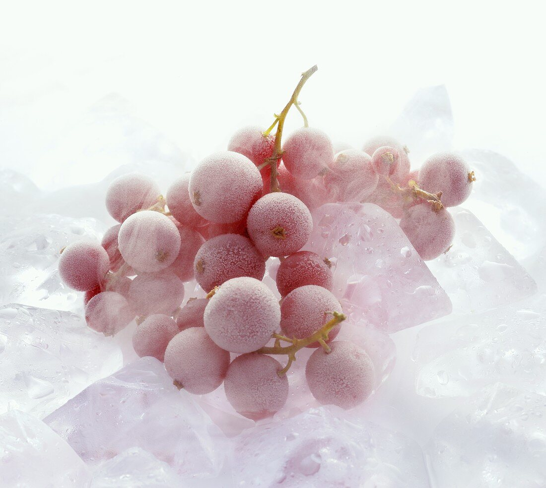 Frozen redcurrants on ice cubes
