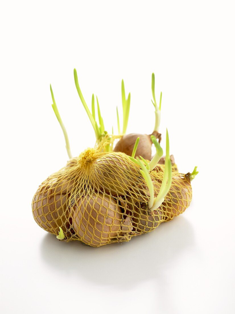White onions (with shoots) in net