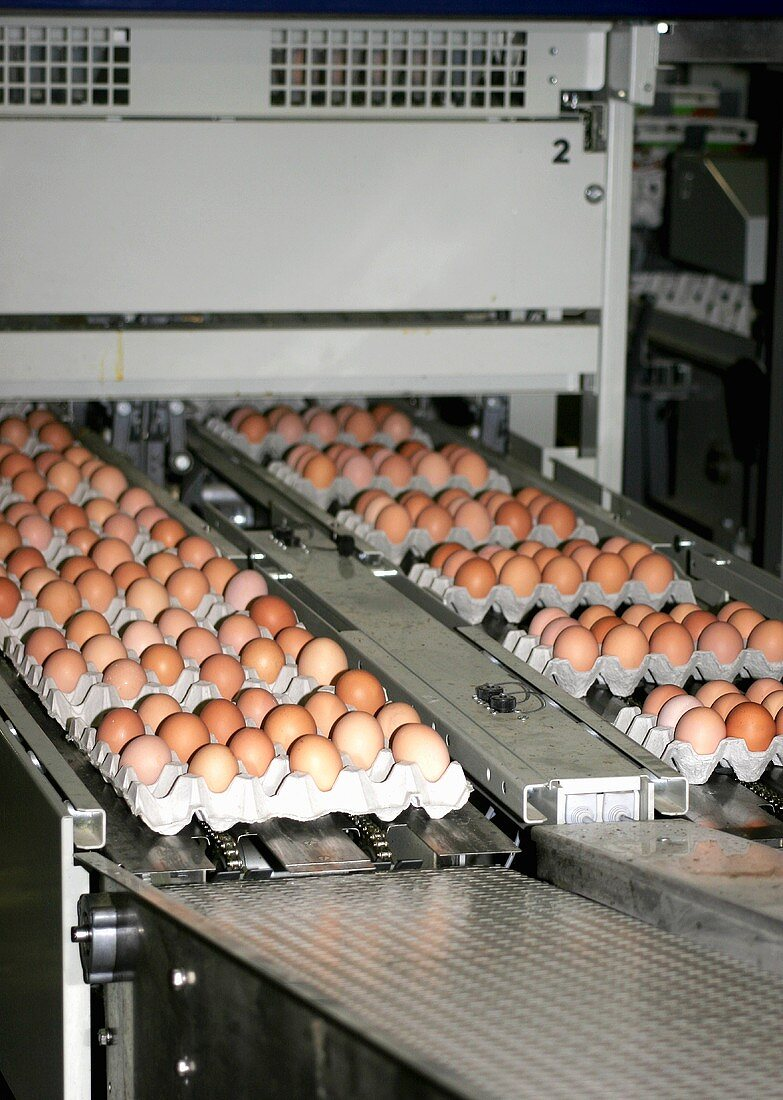 Eggs in egg trays on conveyor belts