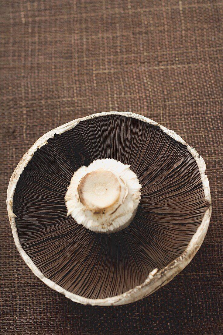 Portobello mushroom from below