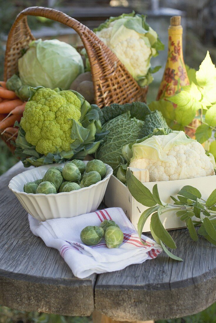 Vegetable still life with various types of brassicas