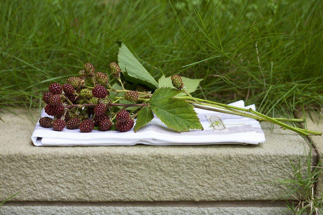 Blackberry sprig on a dish cloth