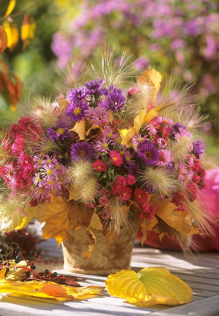 Michaelmas daisies, foxtail barley & fountain grass