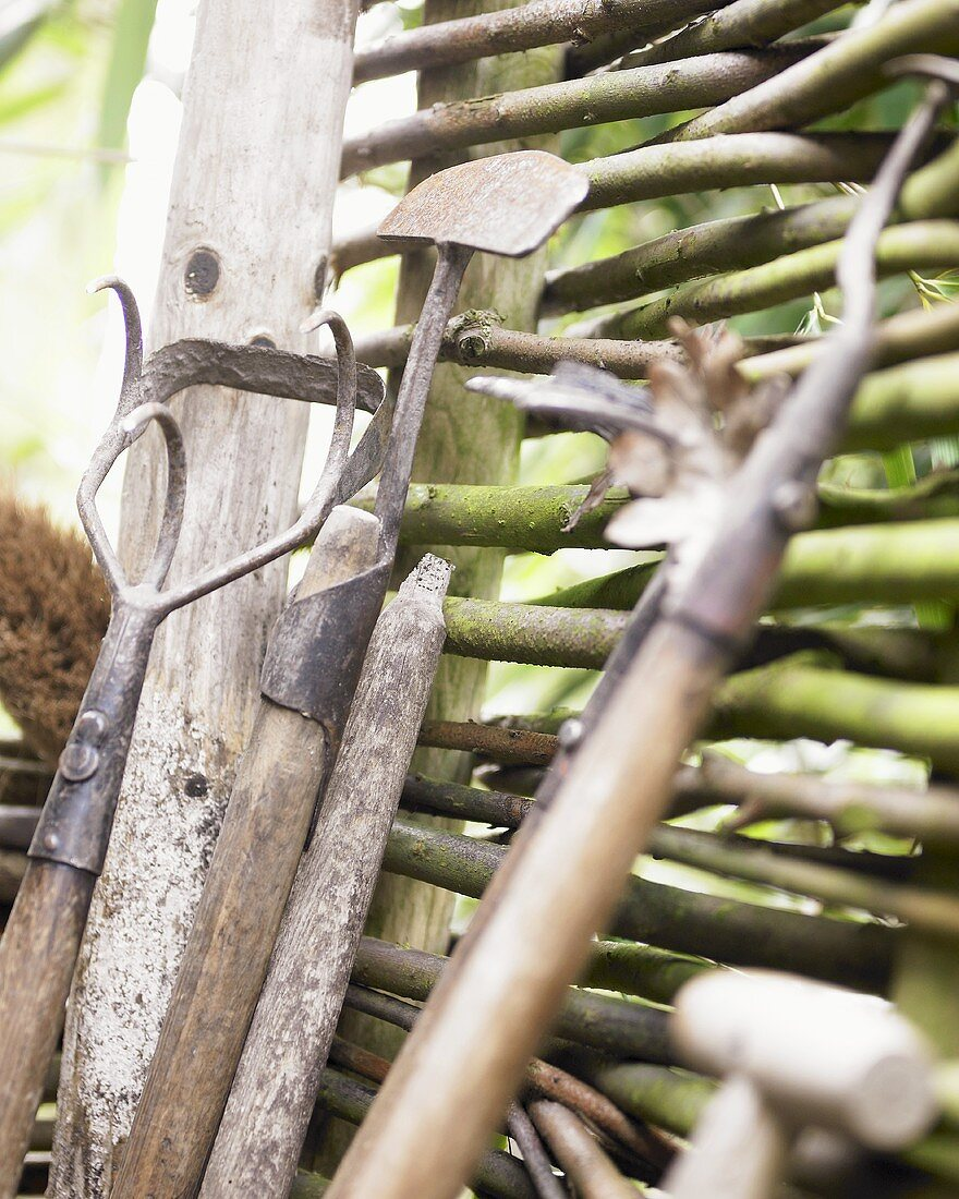 Garden tools by willow hurdle