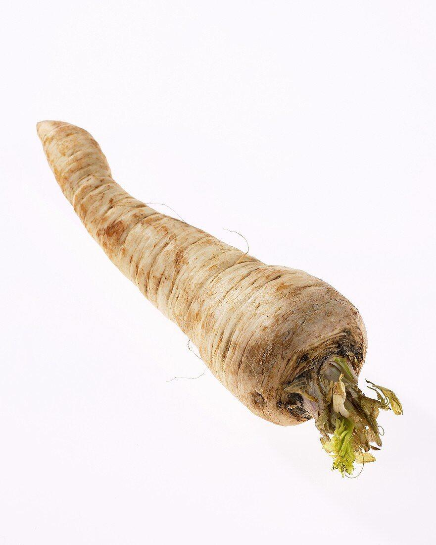 A Hamburg parsley root (Petroselinum crispum ssp. tuberosum)