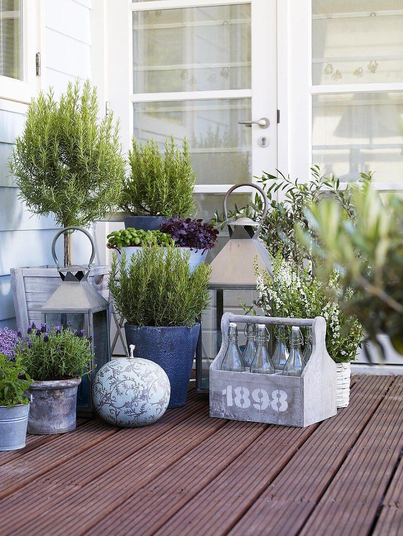 Various herbs in pots on terrace