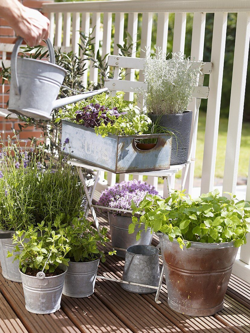 Watering herbs on a balcony