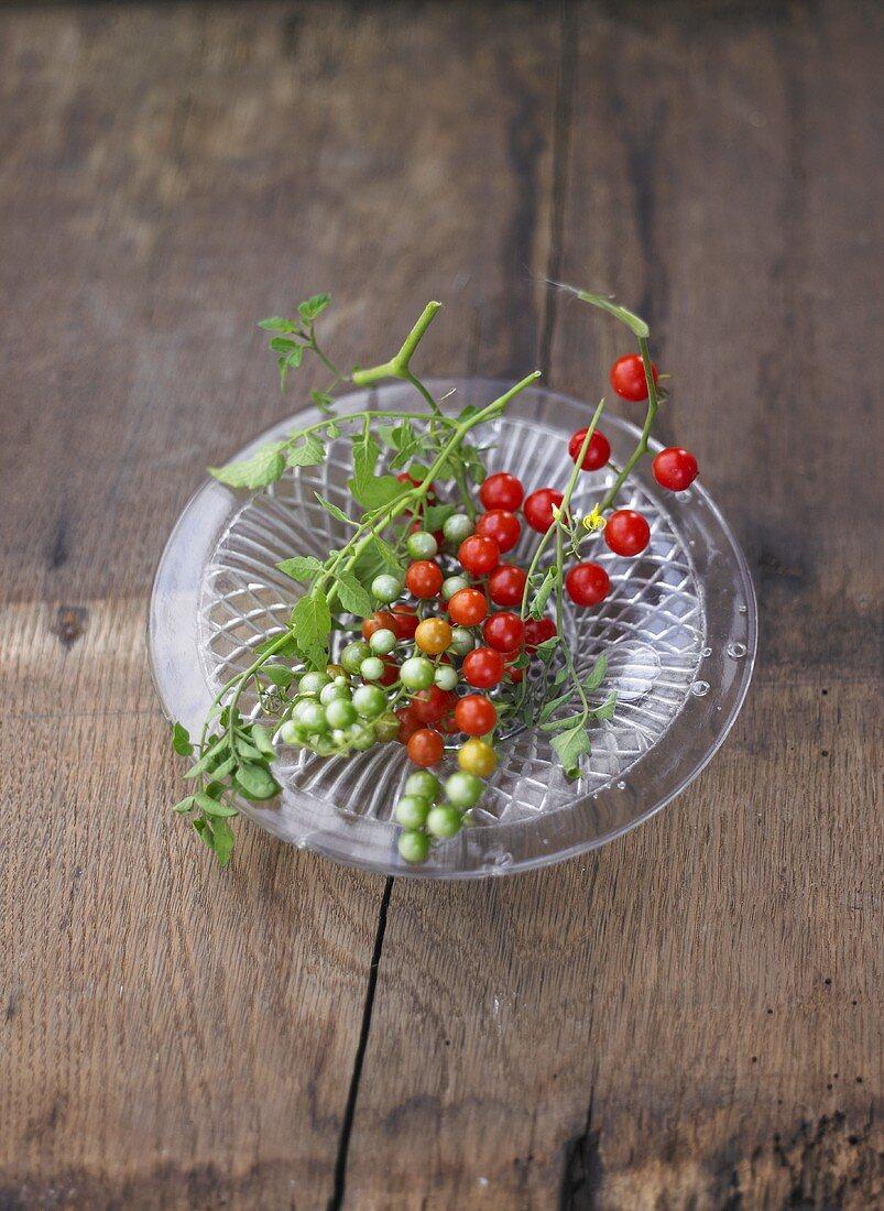Tomatoes, variety 'Johannisbeere', on glass plate