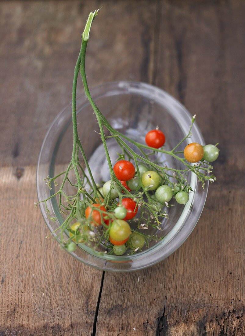 Wild tomatoes on the vine in glass dish