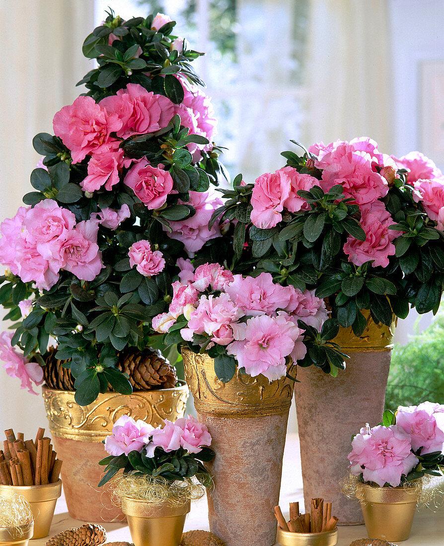 Azaleen in weihnachtlich dekorierten Vasen