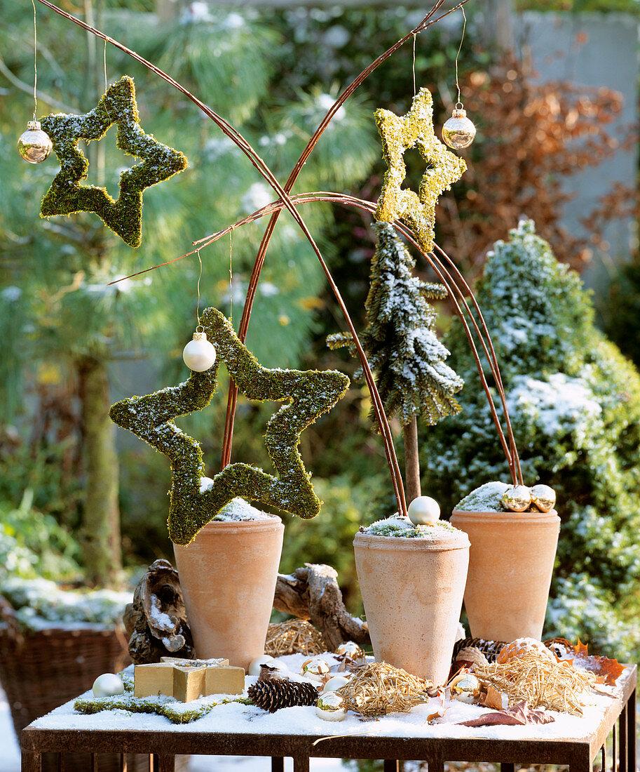 Christmas arrangement: terracotta pots with moss stars