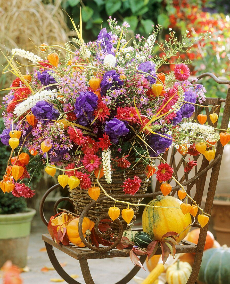 Autumnal arrangement of asters, chrysanthemums, Chinese lanterns, monkshood, ears of oat and bugbane