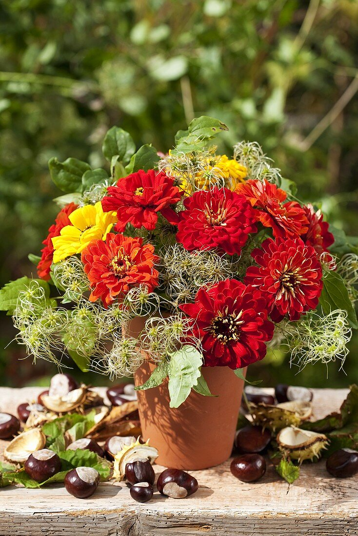 Zinnias and clematis seed heads in terracotta pot