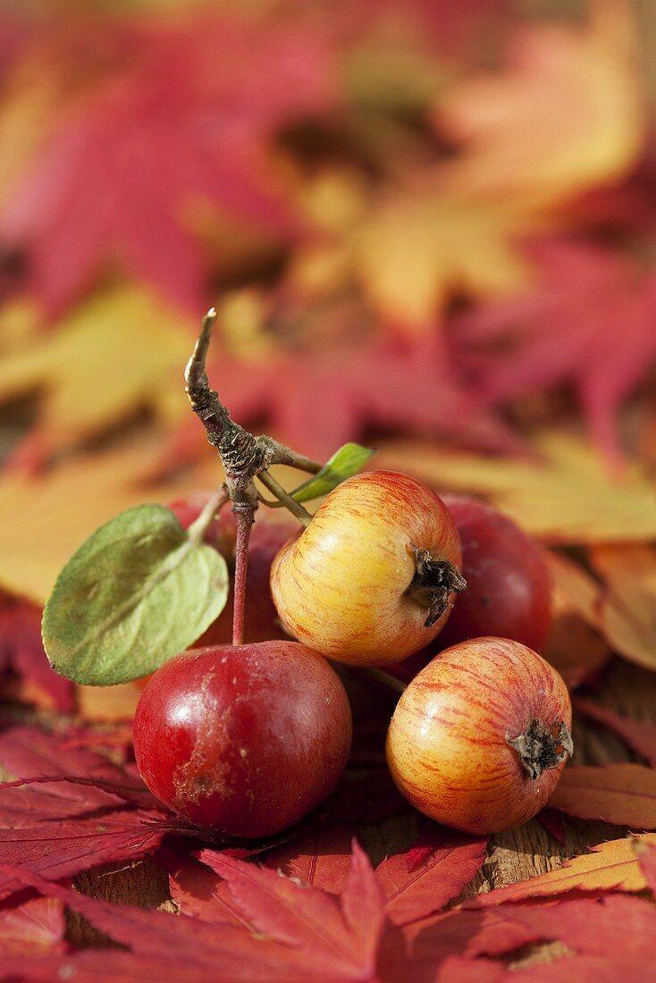 Zieräpfel auf japanischen Ahornblättern
