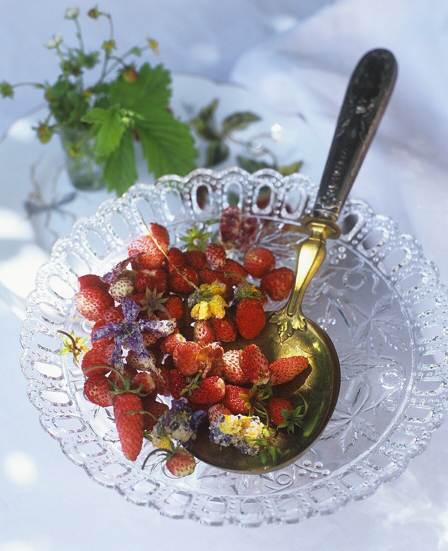 Alpine strawberries with candied flowers